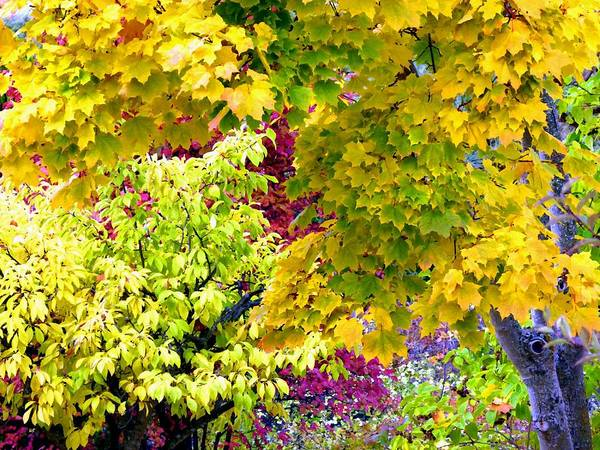 Wall Art - Digital Art - Trappings Of Autumn by Will Borden