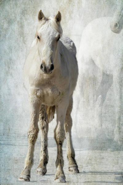 Photograph - Traveler Portrait No 2 by Belinda Greb
