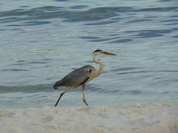 Photograph - Ocean Wanderer by Richard Parks