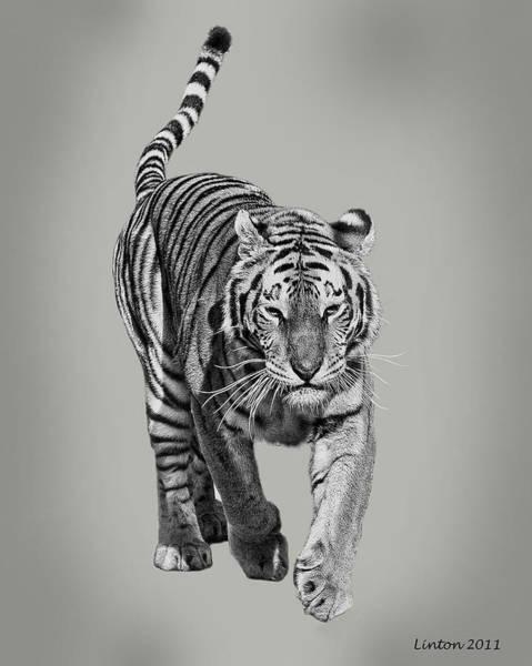 Digital Art - Traveling Tiger by Larry Linton