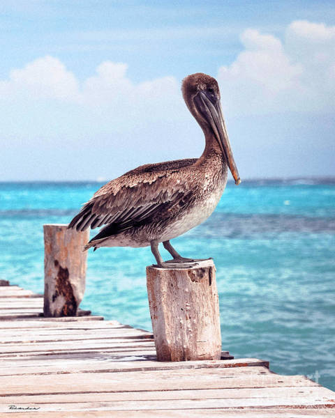 Photograph - Treasure Coast Pelican Pier Seascape C1 by Ricardos Creations