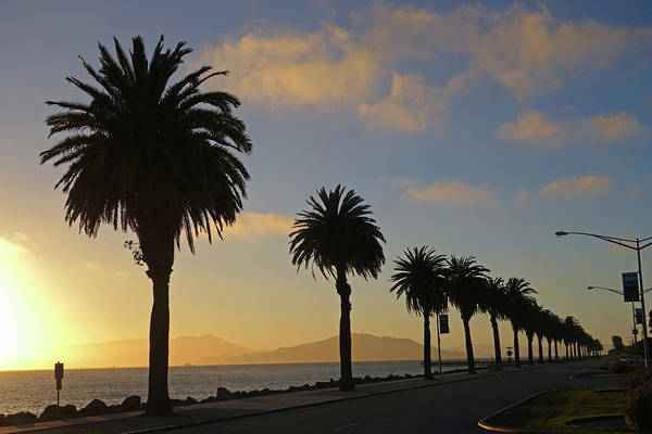 Photograph - Treasure Island Sunset Palm Trees San Francisco Ca by Toby McGuire