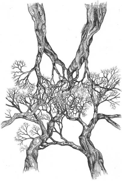 Tree 12 Art Print