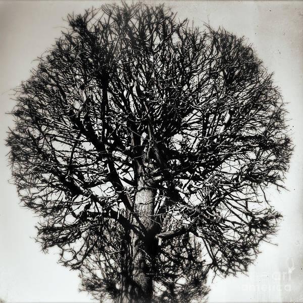 Photograph - Tree #171 by Andrey  Godyaykin