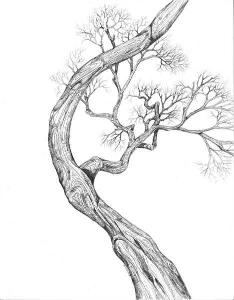 Digital Art - Tree 41 by Brian Kirchner