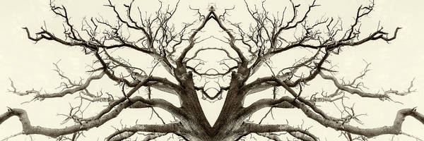 Photograph - Tree Abstract In Brown by John Williams