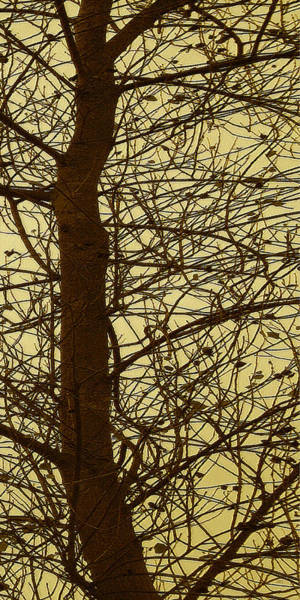 Wall Art - Photograph - Tree Abstract In Yellow No 3 by Ben and Raisa Gertsberg