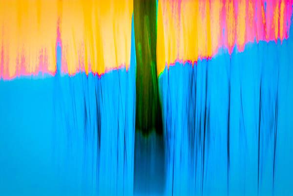Photograph - Tree Abstract by  Onyonet  Photo Studios
