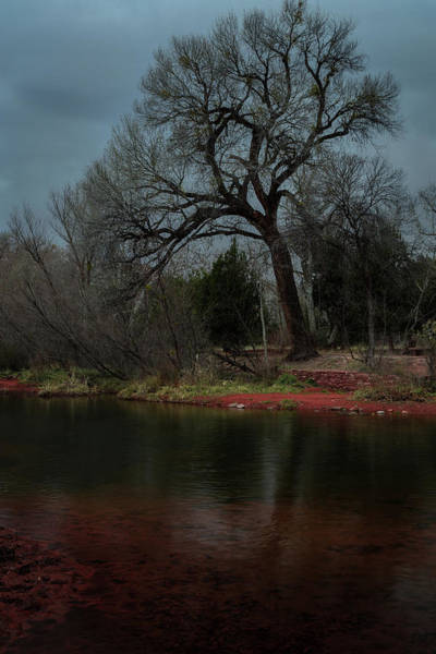 Photograph - Tree Against Storm Clouds by Rick Strobaugh