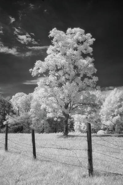 Treen Photograph - Tree And Fence by Cindy Archbell