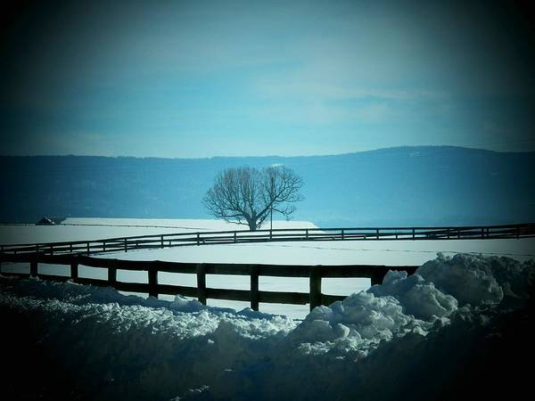 Wall Art - Photograph - Tree And Fence In Snow by Joyce Kimble Smith