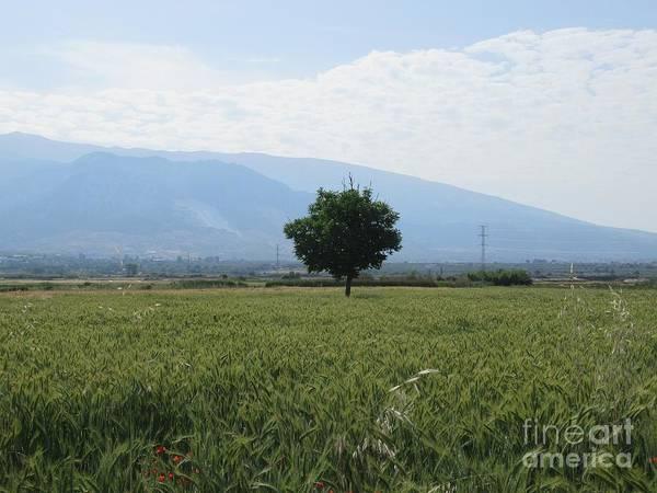 Photograph - Tree And Field Near Padul by Chani Demuijlder