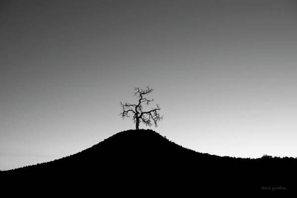 Photograph - Tree And Hill Bw by David Gordon