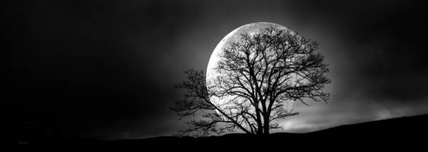 Photograph - Tree And Moon by Bob Orsillo