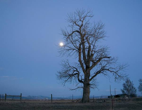 Photograph - Tree And Moon by Dutch Bieber