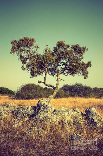 Olives Photograph - Tree And Rocks by Carlos Caetano