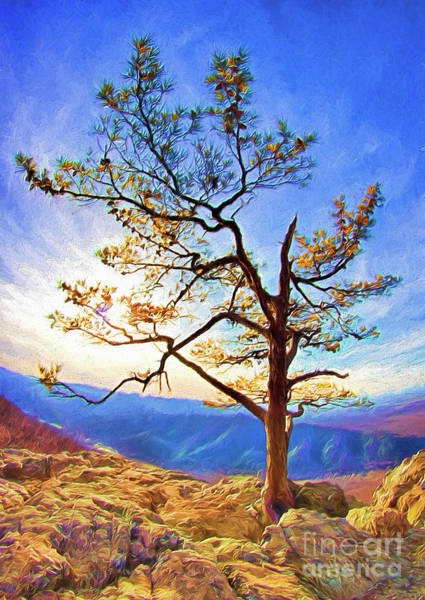 Roost Painting - Tree And Rocks In The Blue Ridge Near Sunset Ap by Dan Carmichael
