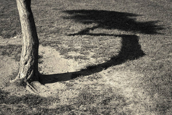 Photograph - Tree And Shadow I Toned by David Gordon