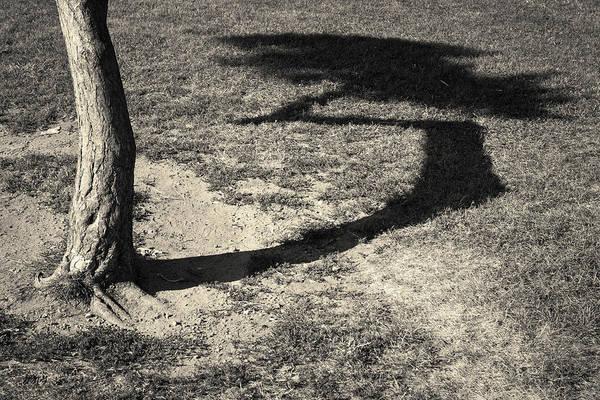 Photograph - Tree And Shadow I Toned by David Gordon