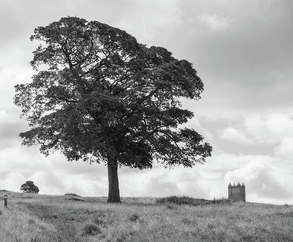 Wall Art - Photograph - Tree And The Cage Tower In The Distance In Lyme Park Estate In B by Iordanis Pallikaras