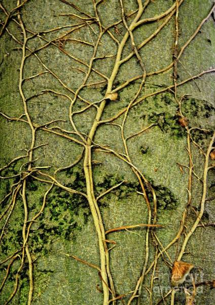 Photograph - Tree Art by Martyn Arnold
