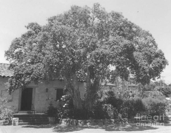 Tree At Carmel Mission Art Print