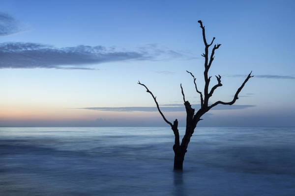 Photograph - Tree At Dawn by Denise Bush