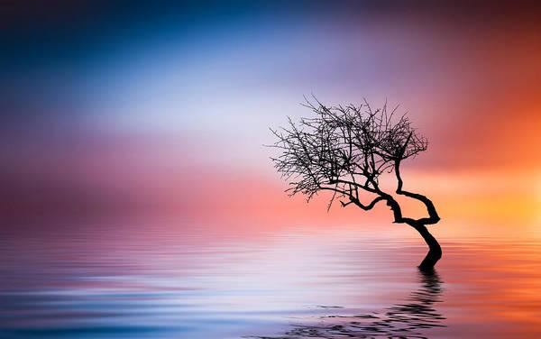 Green Apple Photograph - Tree At Lake by Bess Hamiti