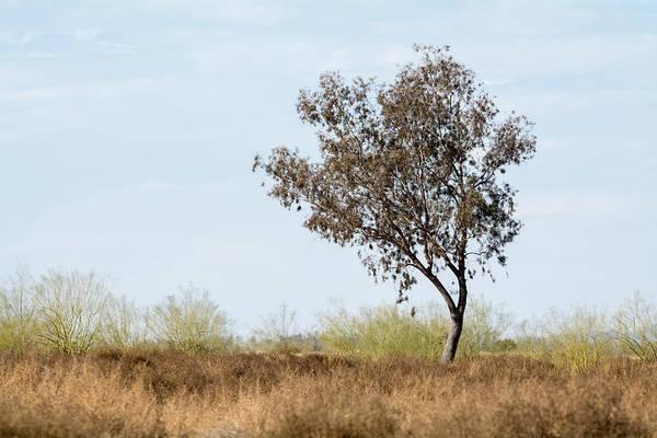 Photograph - Tree At Santa Cruz Flats by Tam Ryan