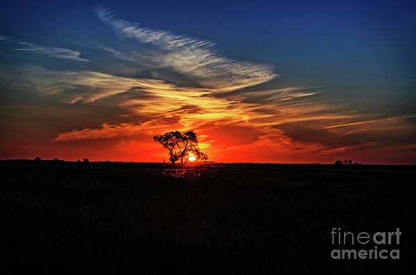 Evening Wall Art - Photograph - Tree At Sunset by Viktor Birkus
