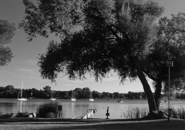 Photograph - Tree At The Water by Jake Whalen