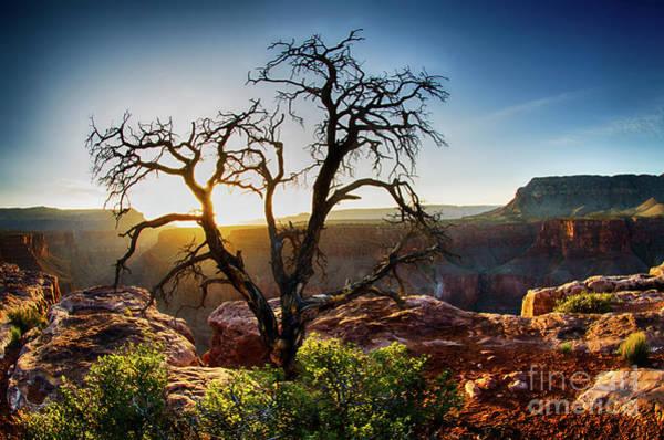 Wall Art - Photograph - Tree At Toroweap Grand Canyon by Bob Christopher