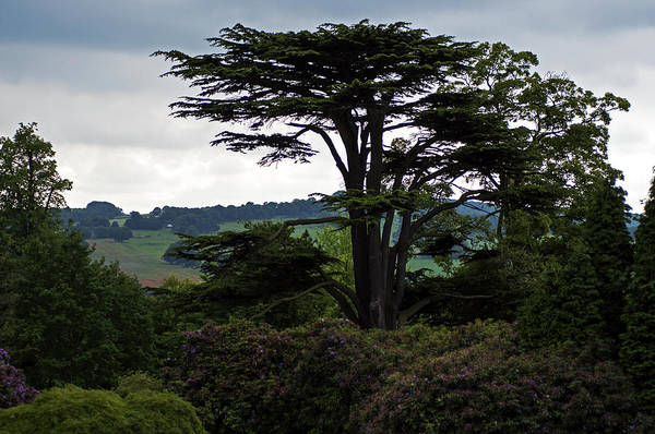 Photograph - Tree At Yorkshire Sculpture Park by Dubi Roman