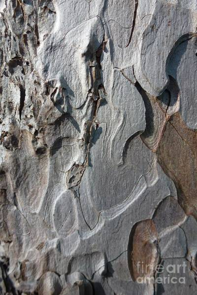 Photograph - Tree Bark 4 by Jean Bernard Roussilhe