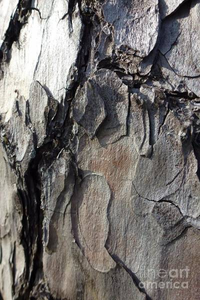 Photograph - Tree Bark 5 by Jean Bernard Roussilhe