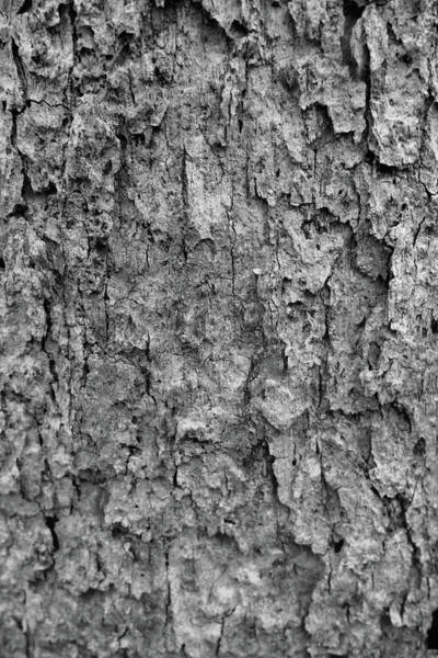 Wall Art - Photograph - Tree Bark Black And White by Dan Sproul