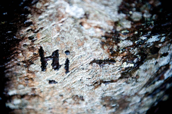 Photograph - Tree Bark Graffiti - Hi by Helen Northcott