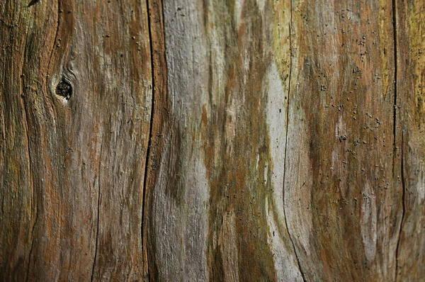 Photograph - Tree Bark Textures And Hues by Andrea Kollo