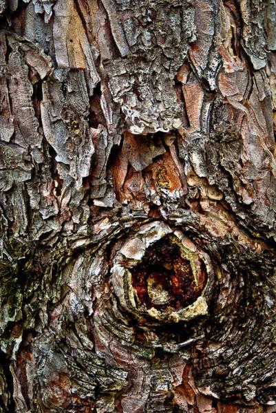 Photograph - Tree Bark With Knothole by  Onyonet  Photo Studios