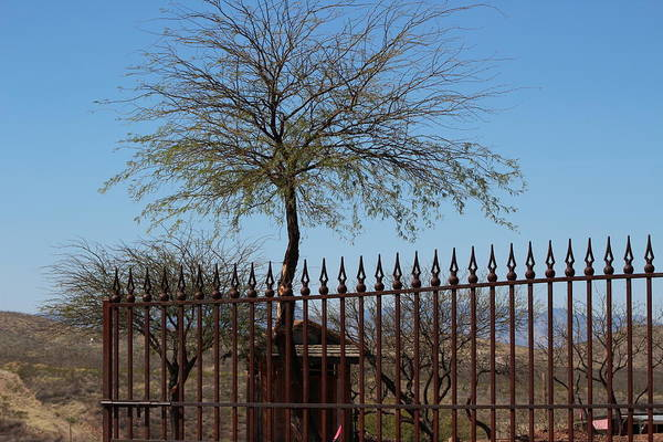 Photograph - Tree Behind Mining Shack by Colleen Cornelius