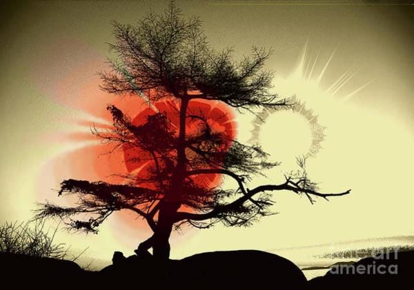 Wall Art - Photograph - Tree Blossom 2 by Elaine Hunter