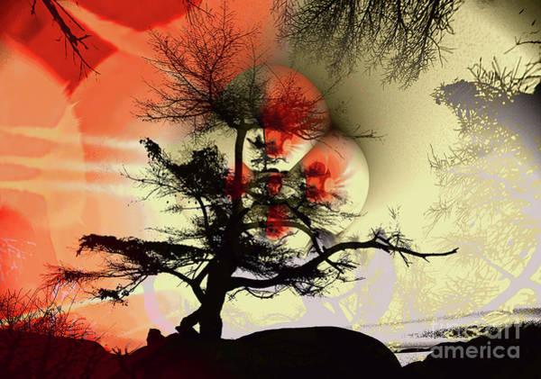 Wall Art - Photograph - Tree Blossom 3 by Elaine Hunter
