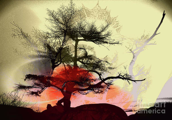 Wall Art - Photograph - Tree Blossom 4 by Elaine Hunter