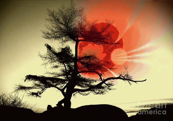 Wall Art - Photograph - Tree Blossom by Elaine Hunter
