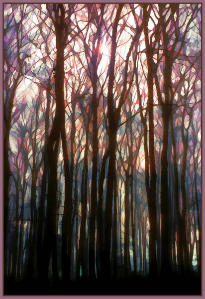 Wall Art - Digital Art - Tree Branch Cathedral by Antique Images