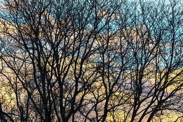 Photograph - Tree Branches And Colorful Clouds by James BO Insogna