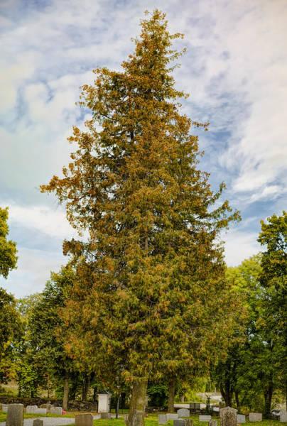 Photograph - Tree Db by Leif Sohlman