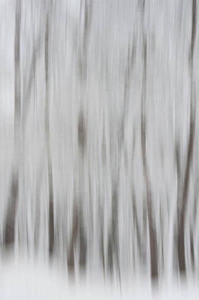 Photograph - Tree Dreams by Stewart Helberg