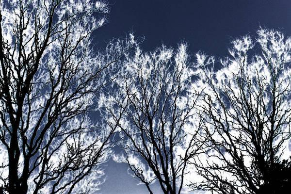 Photograph - Tree Fantasy 2 by Lee Santa