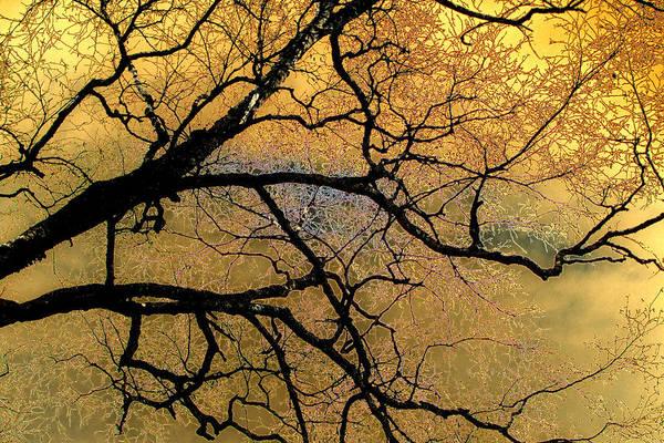 Photograph - Tree Fantasy 7 by Lee Santa